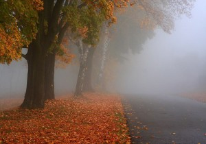 Autumn Mist... 