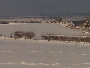 Snow filled fields... so picturesque...
